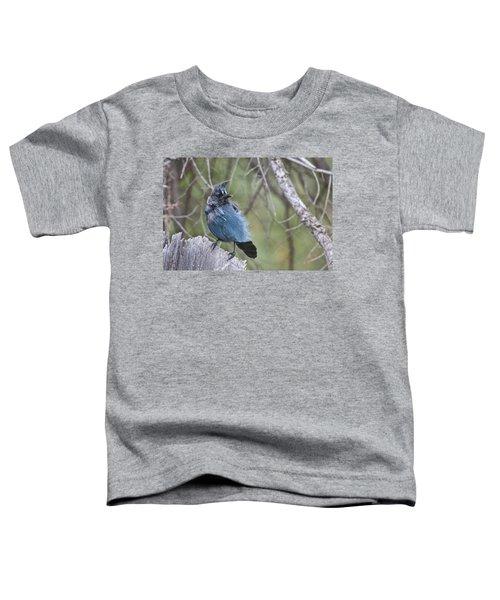 Stellar's Jay Toddler T-Shirt