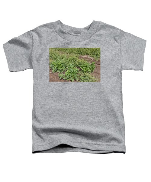 Sugar Beets, Seed Production Toddler T-Shirt