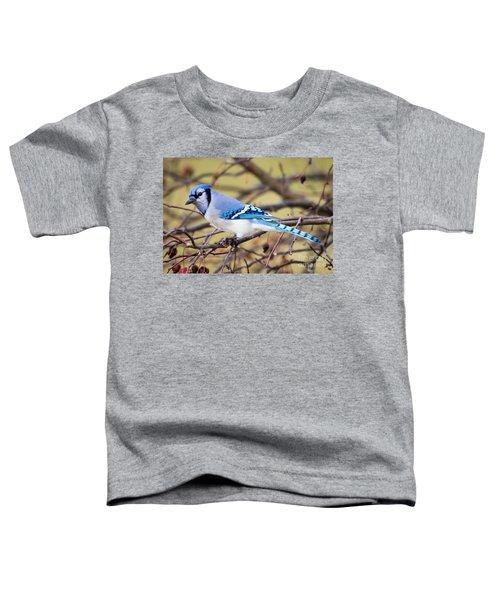 The Winter Blue Jay  Toddler T-Shirt