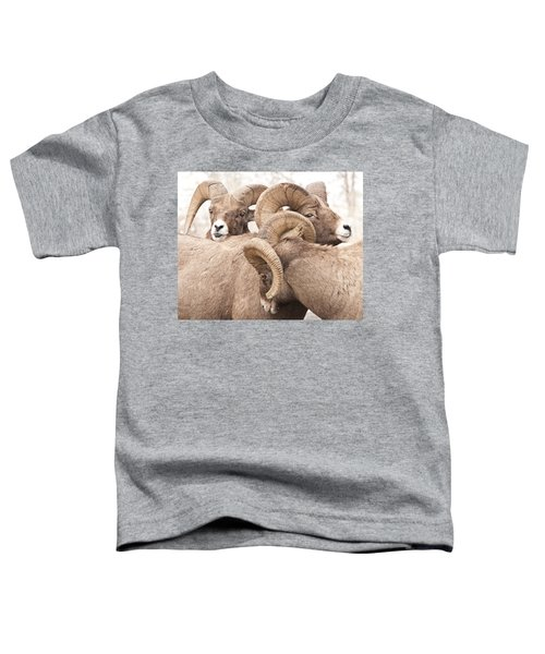 Three Bighorn Rams Toddler T-Shirt