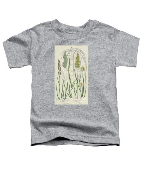 Vintage Botanical Print Of Grass Varieties Toddler T-Shirt