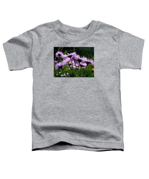 Wild Mountain Asters Toddler T-Shirt