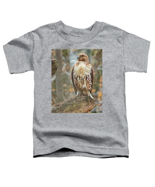 Young Red Tailed Hawk  Toddler T-Shirt