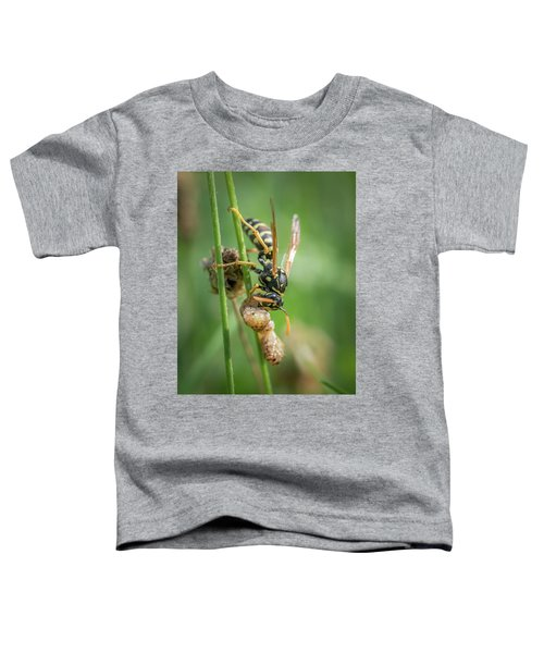 A European Paper Wasp Eating Prey Sitting On Grass Toddler T-Shirt