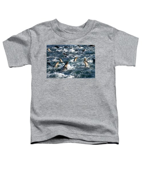 A Raft Of Sea Lions Toddler T-Shirt