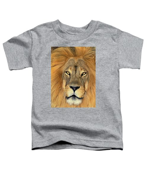 African Lion Portrait Wildlife Rescue Toddler T-Shirt