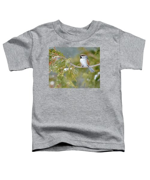 Boreal Chickadee In Winter Toddler T-Shirt