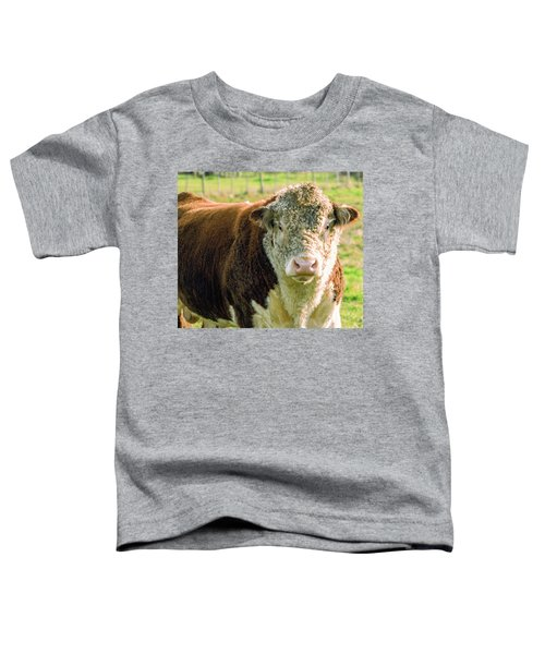 Bull In The Country Side Of Tasmania. Toddler T-Shirt
