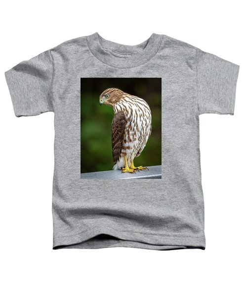 Cooper's Hawk Toddler T-Shirt