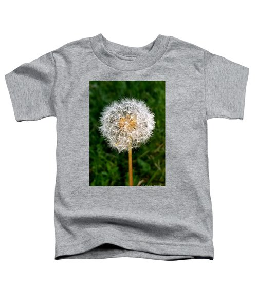 Dandelion 1 Toddler T-Shirt