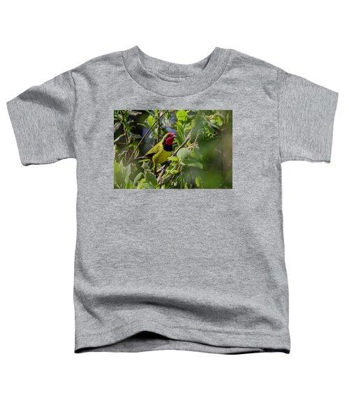 Doherty's Bushshrike Toddler T-Shirt
