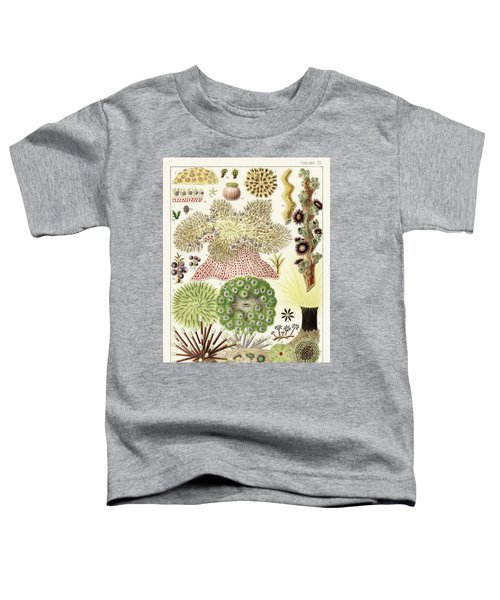 Great Barrier Reef Anemones From The Great Barrier Reef Of Australia  1893  By William Saville-kent  Toddler T-Shirt