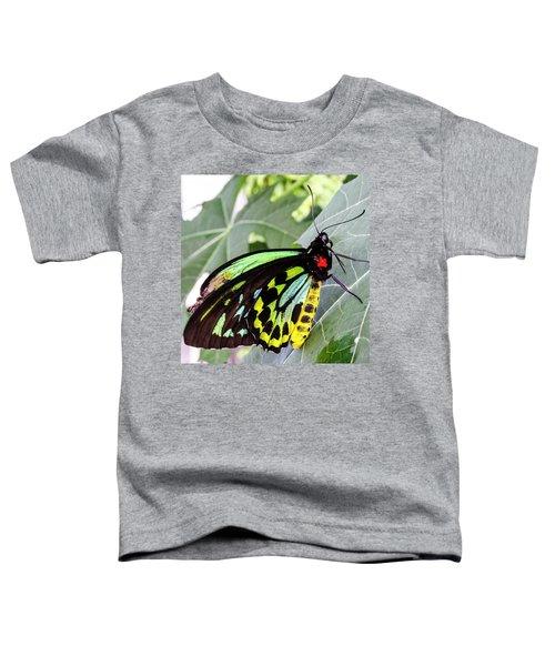 Insect Kaleidescope Toddler T-Shirt