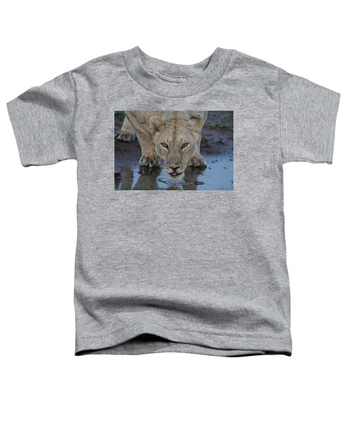 Lioness Drinking Toddler T-Shirt