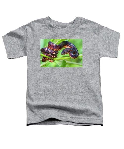 Madagascar Ground Boa Acrantophis Toddler T-Shirt