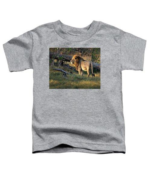 Male Lion In Botswana Toddler T-Shirt