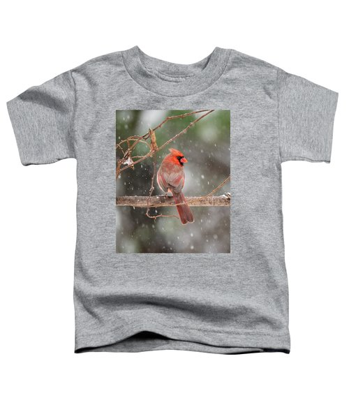 Male Red Cardinal Snowstorm Toddler T-Shirt