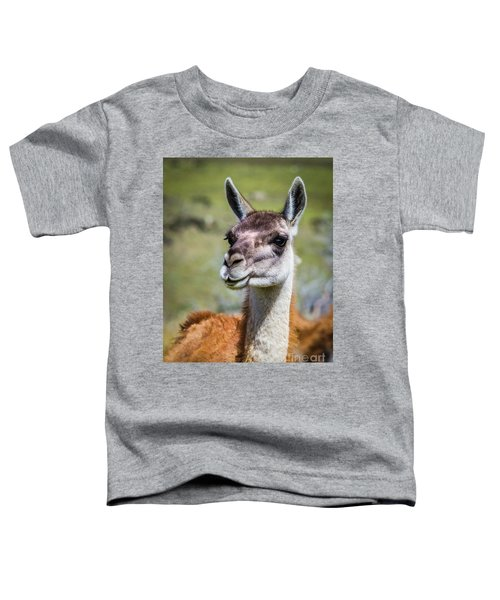 Portrait Of A Guanaco, Patagonia Toddler T-Shirt