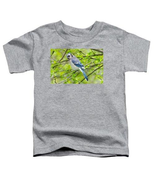 Springtime Bluejay Toddler T-Shirt