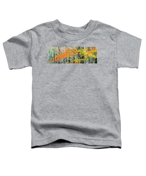 Sugar Maple Acer Saccharum In Autumn Toddler T-Shirt