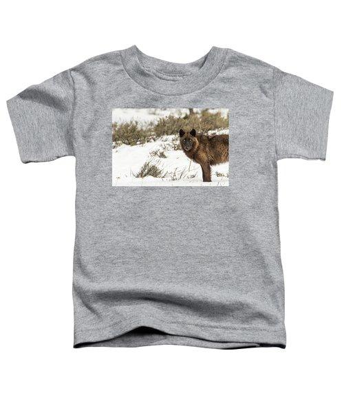W12 Toddler T-Shirt