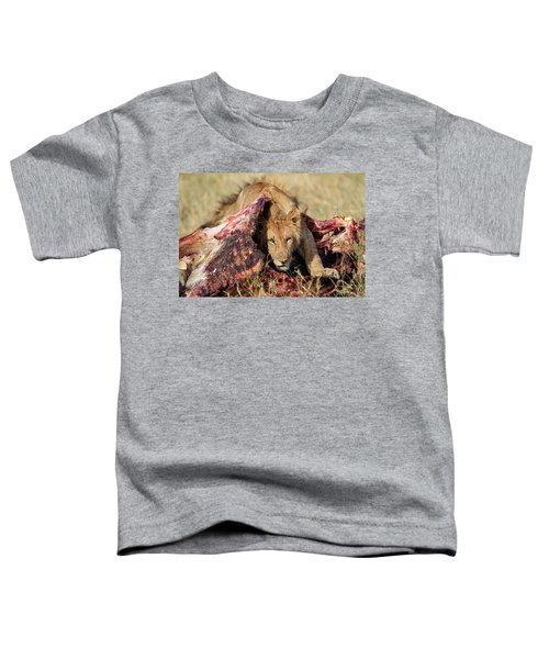 Young Lion On Cape Buffalo Kill Toddler T-Shirt