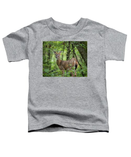 Young White-tailed Deer, Odocoileus Virginianus, With Velvet Antlers Toddler T-Shirt
