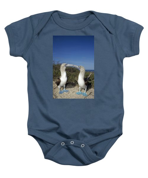 Blue-footed Boobies Courting Galapagos Baby Onesie by Tui De Roy