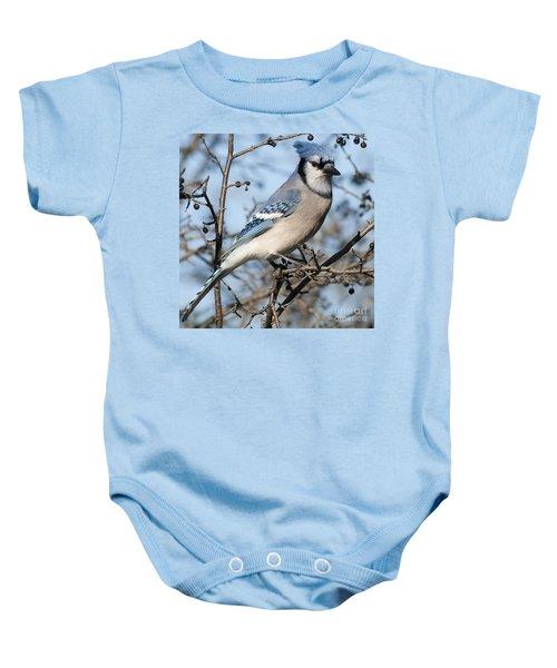 Blue Jay.. Baby Onesie
