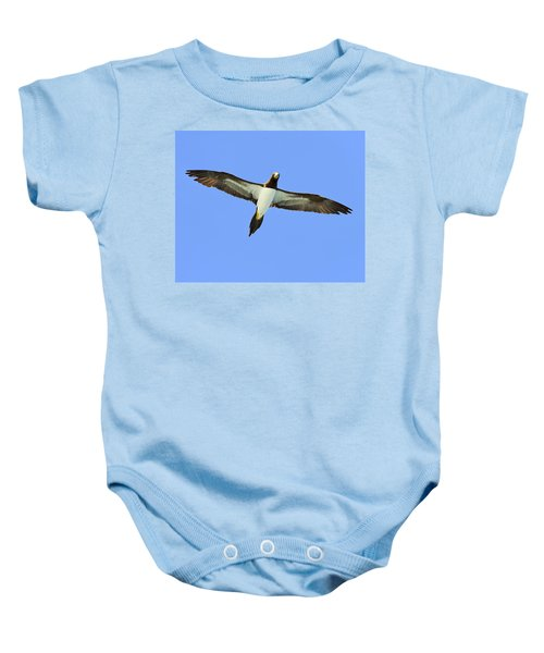 Brown Booby Baby Onesie by Tony Beck