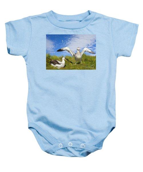 Wandering Albatross Courting  Baby Onesie