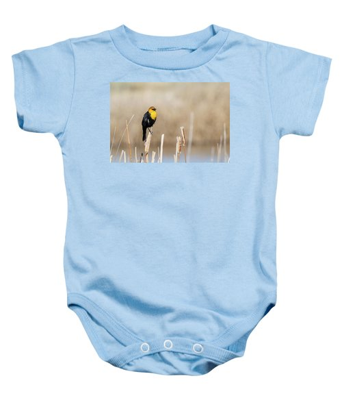 Yellow Headed Blackbird Baby Onesie