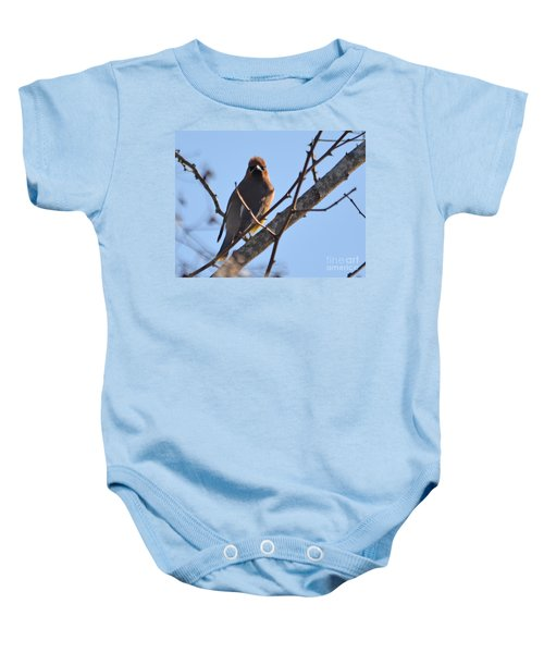 Cedar Wax Wing On The Lookout Baby Onesie by Barbara Dalton