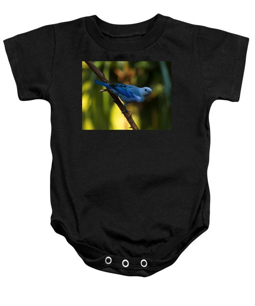 Blue Grey Tanager Baby Onesie