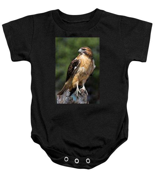 Red Tail Hawk Portrait Baby Onesie