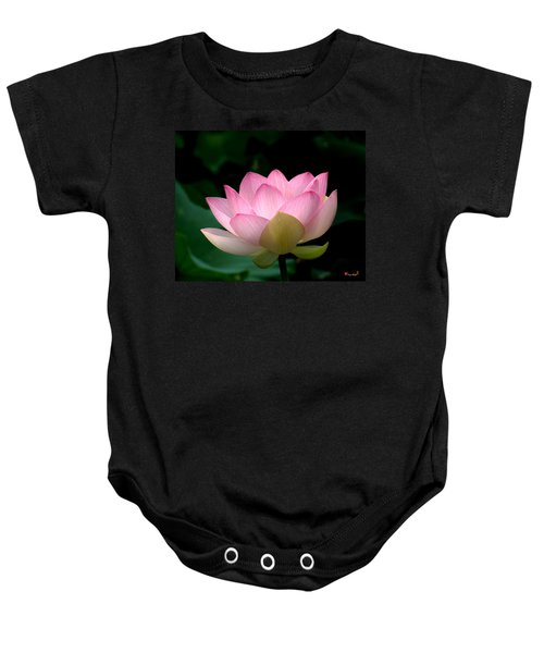 Lotus Beauty--blushing Dl003 Baby Onesie