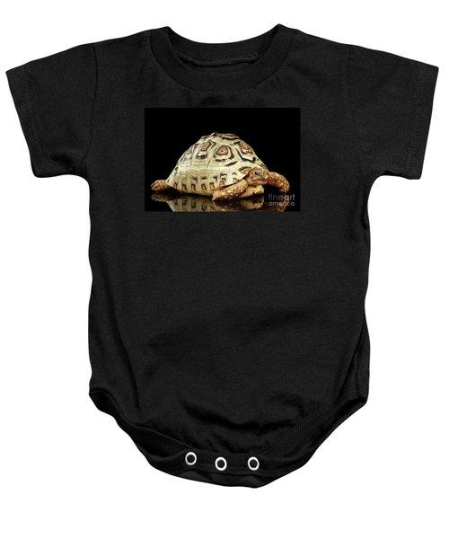 Closeup Leopard Tortoise Albino,stigmochelys Pardalis Turtle With White Shell On Isolated Black Back Baby Onesie