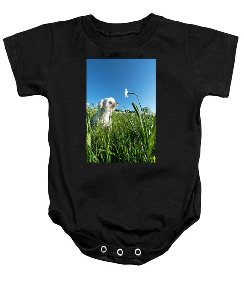 Blooming Daffodils In The Antola Park With Maltese IIi Baby Onesie