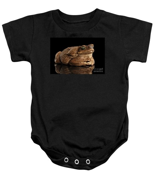 Cane Toad - Bufo Marinus, Giant Neotropical Or Marine Toad Isolated On Black Background Baby Onesie