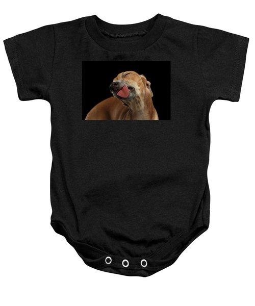 Closeup Cute Italian Greyhound Dog Licked With Pleasure Isolated Black Baby Onesie