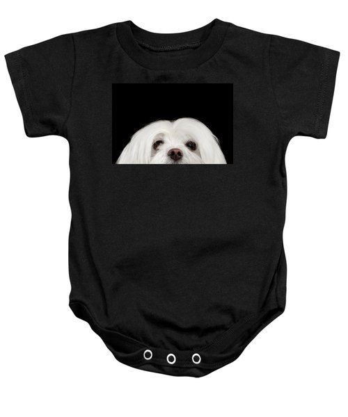 Closeup Nosey White Maltese Dog Looking In Camera Isolated On Black Background Baby Onesie