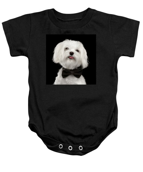 Closeup Portrait Of Happy White Maltese Dog With Bow Looking In Camera Isolated On Black Background Baby Onesie