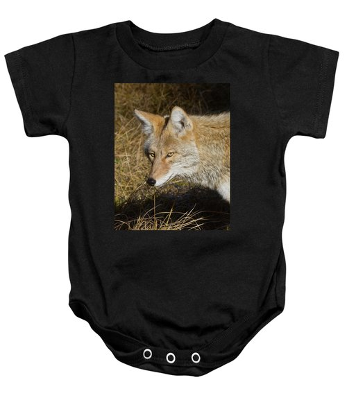 Coyote In The Wild Baby Onesie
