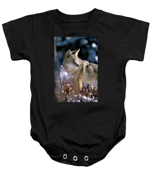 Coyote In Winter Light Baby Onesie