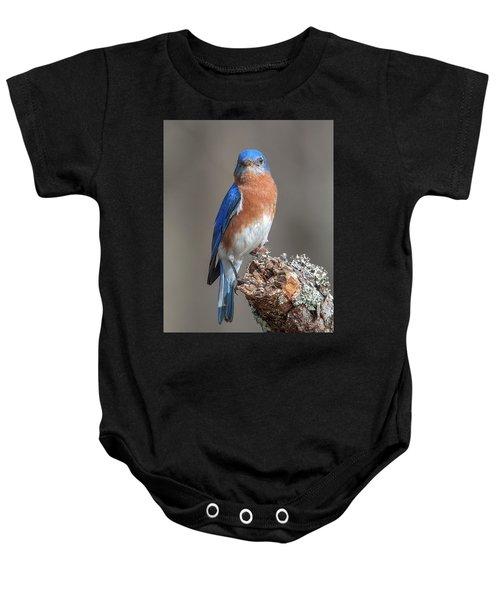 Eastern Bluebird Dsb0300 Baby Onesie