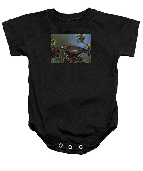Red Crossbill Feeds On Pine Cone Seeds Baby Onesie by Mark Wallner