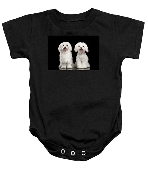 Two Happy White Maltese Dogs Sitting, Looking In Camera Isolated Baby Onesie