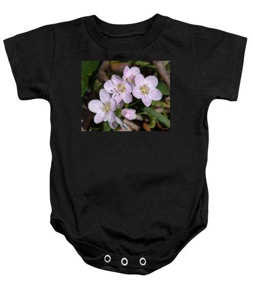 Virginia Or Narrowleaf Spring-beauty Dspf041 Baby Onesie