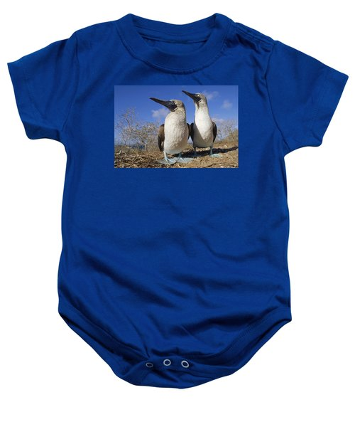 Blue-footed Booby Courting Couple Baby Onesie by Tui De Roy