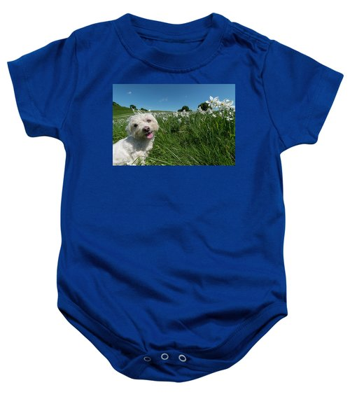 Blooming Daffodils In The Antola Park With Maltese II Baby Onesie
